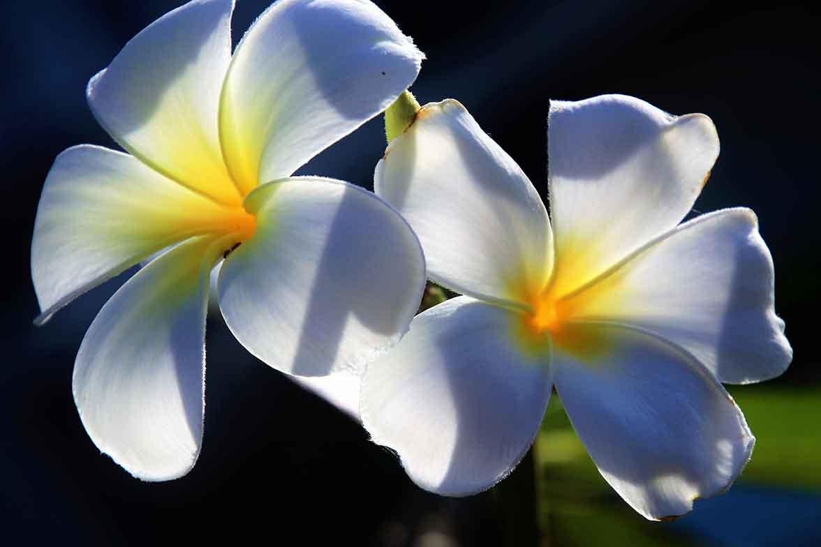 Wachstum Pflanzen Licht Growshop